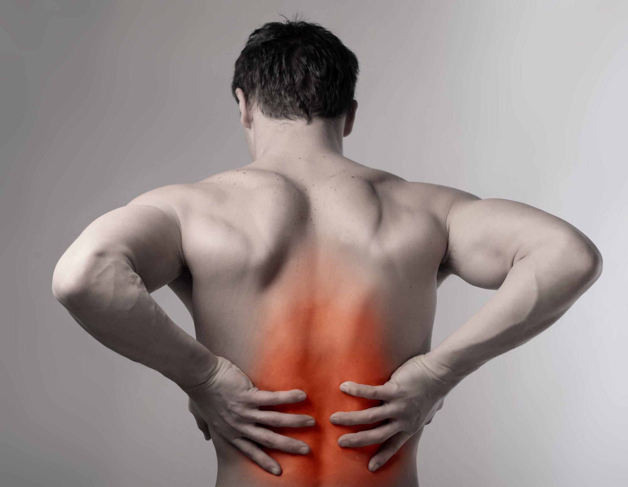 Легкие у человека фото со спины