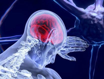 Правда о нервных клетках, которые «не восстанавливаются»