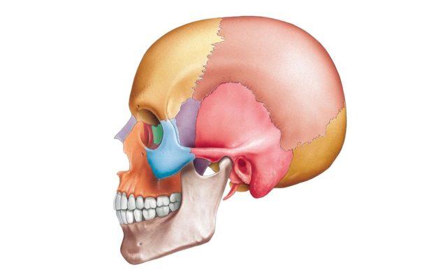 Нормальная анатомия костей черепа человека