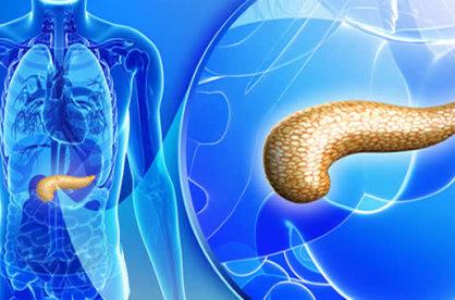 Что такое повышенная эхогенность поджелудочной железы на УЗИ?