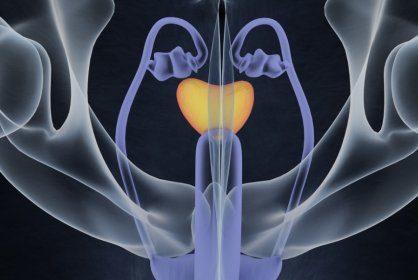 Предстательная железа: строение, размеры, симптомы и лечение основных заболеваний