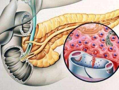 Анатомия и основные функции поджелудочной железы в пищеварении