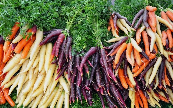 Различные виды моркови