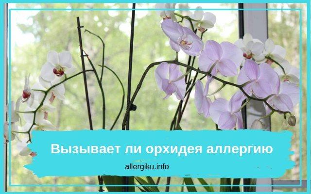 Орхидея аллергенный цветок
