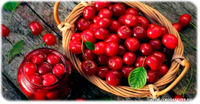 Происхождение вишни