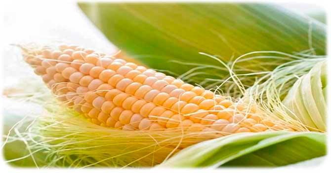 Отруби из кукурузы