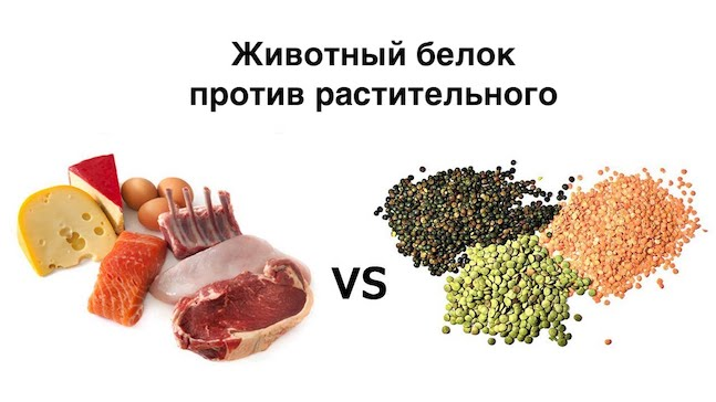 Растительный белок против животного