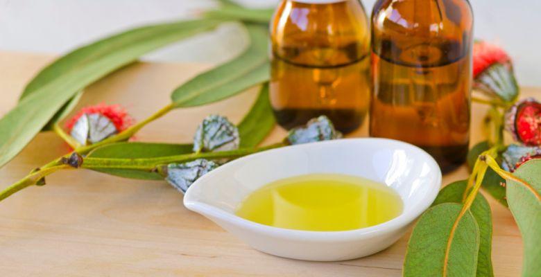 Эфирное масло эвкалипта: полезные свойства и применение в косметологии