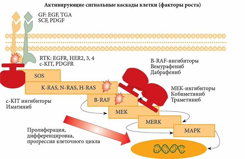 Клинические аспекты классификации меланомы кожи uMEDp